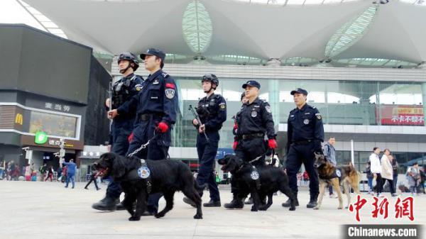 图为春运期间,训导员和警犬们一起亮相福州火车站。 严万星 摄