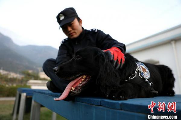 """警犬""""黑风""""已经第6年参加春运安保。图为日常训练中,训导员程代星在观察警犬""""黑风""""的细微举动。 严万星 摄"""