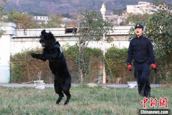 """警犬""""黑风""""已经第6年参加春运安保。图为在玩耍的过程中,程代星和""""黑风""""变得亲密。 严万星 摄"""
