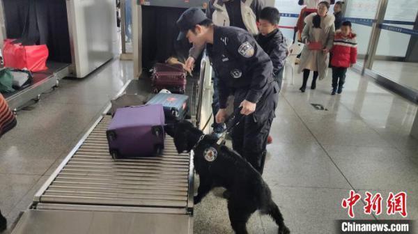 """警犬""""黑风""""已经第6年参加春运安保。图为在福州火车站,工作中的程代星和""""黑风"""" 严万星 摄"""